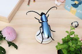 Assembli Rosalia beetle azure blue
