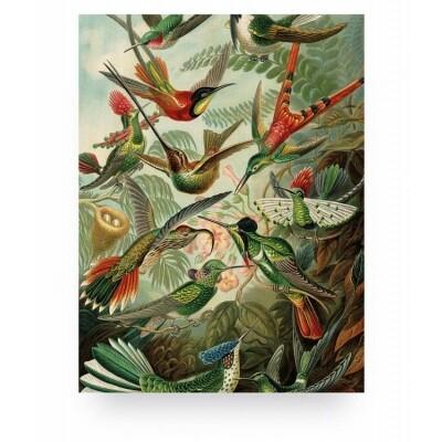 KEK Amsterdam Print op hout Exotic Birds Small