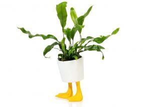 Bitten bloempot Duck Feet small