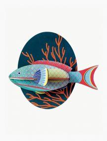 Studio Roof Parrotfish vooraanzicht